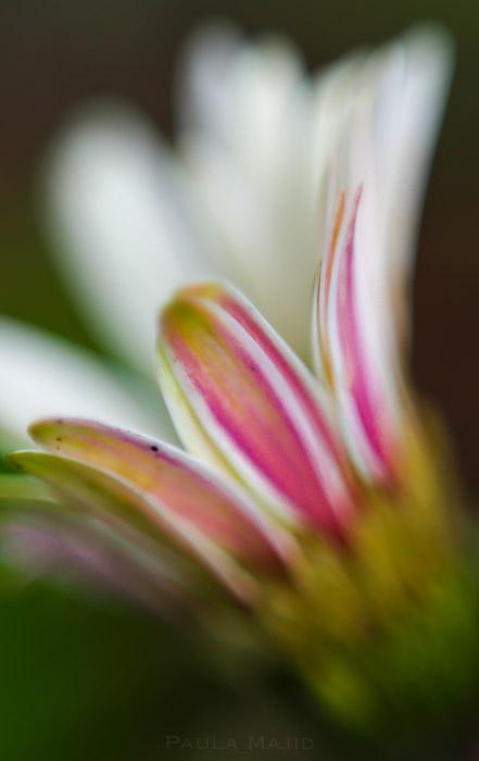 botanic garden-10