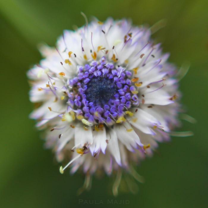 botanic garden-9